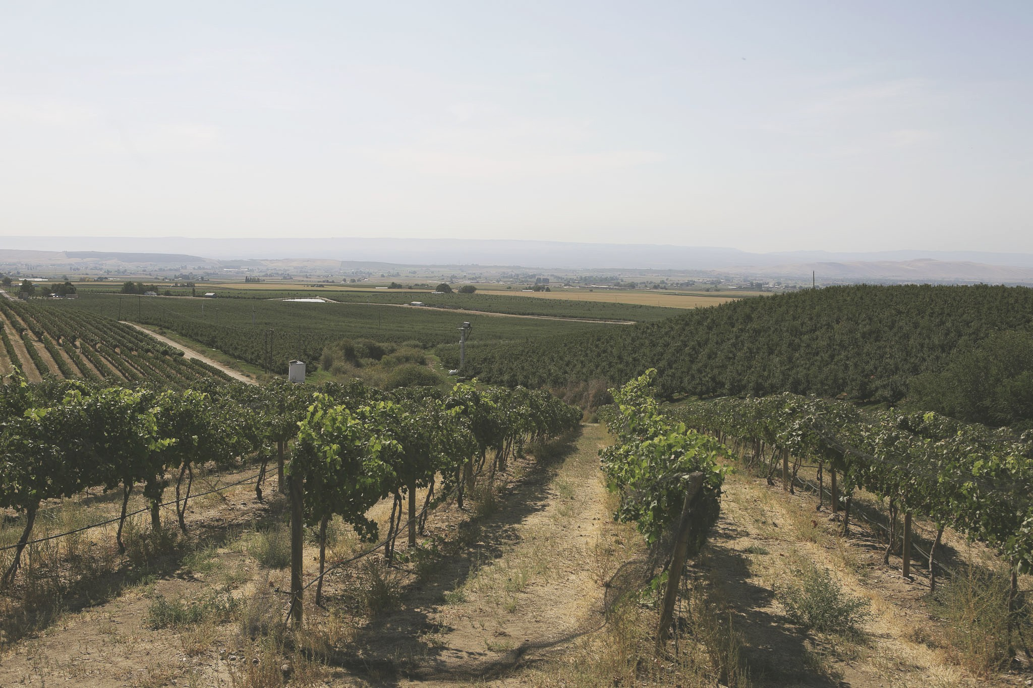 Les Collines Vineyard